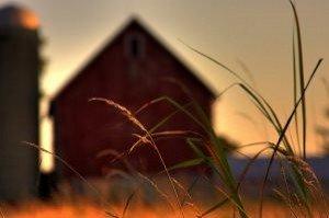 farm-prairie-grass_21081132-300x199