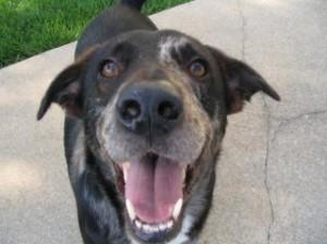 happy-dog-smiling_19-100210-300x224