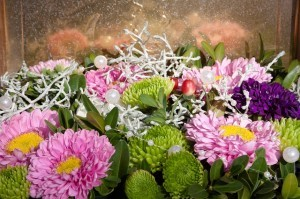 asters-465395_640-300x199