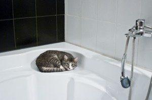cat-1052060_1280-300x199